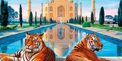 Taj Mahal and Tiger Safari Tour