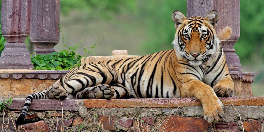 Ranthambore National Park Tour
