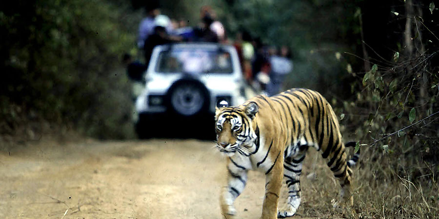 Wildlife Tour Ranthambore